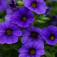 Annual Flower Pruning Tips
