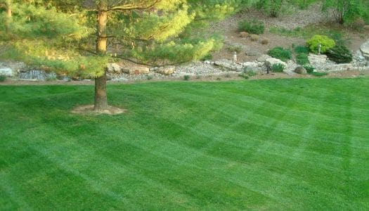 Lawn Mowing Service in Northern Kentucky