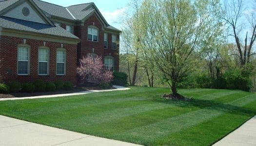 Affordable Lawn Mowing Service