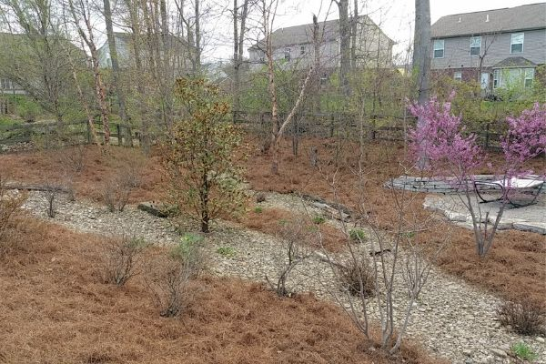 Landscaping 2