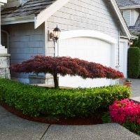 Ornamental Tree Pruning Tips