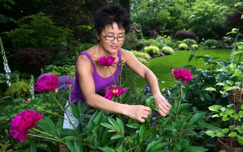 How To Properly Prune Plants