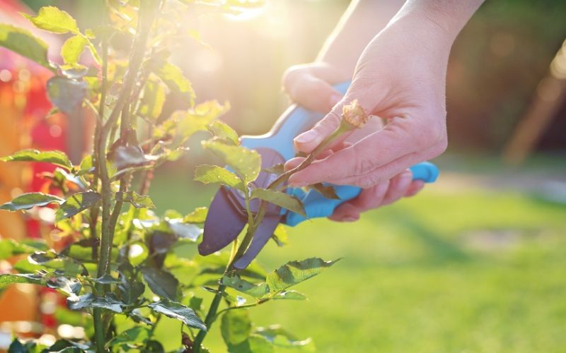 Pruning Plants Guide