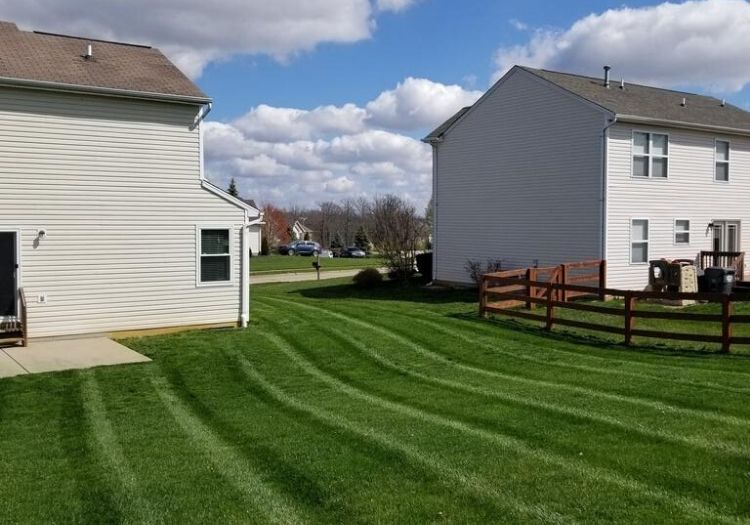 Back lawn with lush green grass.